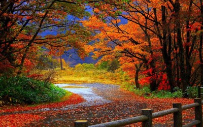 trail in autumn forest-Beautiful scenery wallpaper Preview | 10wallpaper.com