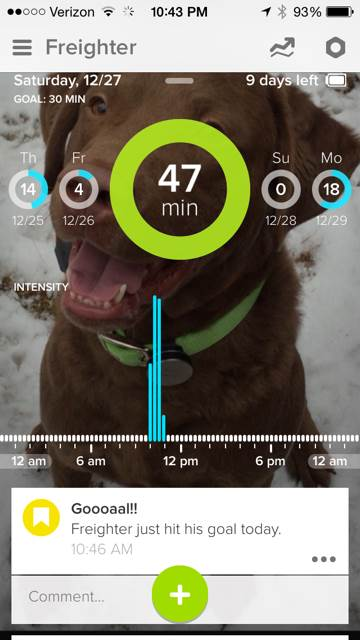 Out For A Run With Whistle - 2 Brown Dawgs Blog
