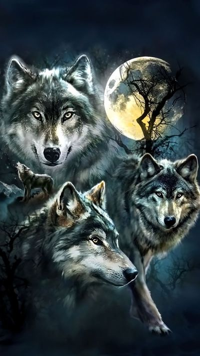Wolf Wallpaper For iPhone   2019 3D iPhone Wallpaper