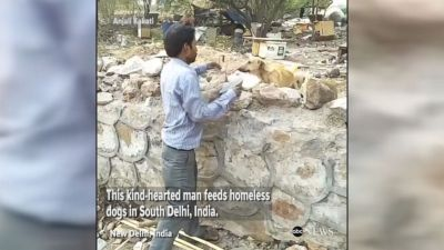 Man feeds homeless dogs in New Delhi, India Video - ABC News