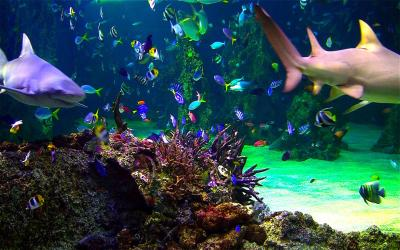 Aquarium Live HD+: ocean screensaver on the Mac App Store