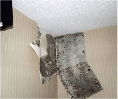 Infrared Home Inspections Can Often Prevent The Need For Utah Mold Testing