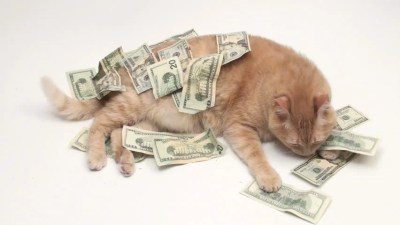 Fat Cat With Money V2 - NTSC Stock Footage Video 767857 | Shutterstock