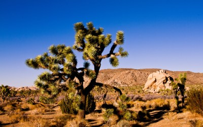 Joshua Tree National Park HD Wallpapers - All HD Wallpapers