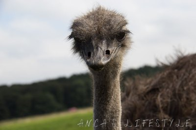 Knowsley safari park, more pictures - Anca's Lifestyle