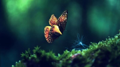 Hd Live Wallpapers (33 Wallpapers) – Adorable Wallpapers