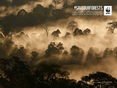 Archived Wallpapers   WWF Malaysia