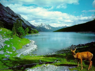 Nature Images | Beautiful Cool Wallpapers