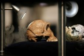 Homo sapiens 100,000 years comparison than thought: Studies