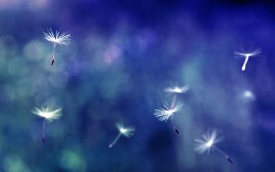 12 Pretty HD Dandelion Wallpapers