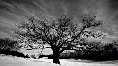 Oak Tree Wallpapers Archives - HDWallSource.com