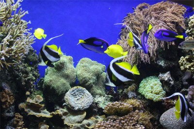 30 Awesome Scenes of Underwater Creature Wallpapers - blueblots.com