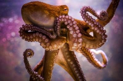 Key West Octopus   Key West Aquarium. [Canon 6d / 24-105mm f…   Flickr