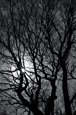 Trees iPhone wallpaper | My neighbor's trees at night in iPh… | Flickr