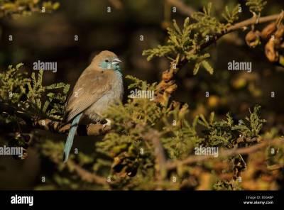 Polokwane, Limpopo Stock Photos & Polokwane, Limpopo Stock Images - Alamy