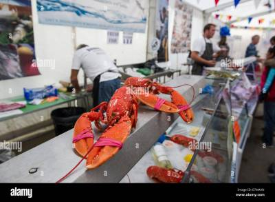 Cooked lobsters for sale at the Newquay Fish festival in Newquay Stock Photo: 73591693 - Alamy