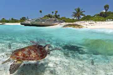 Sea Life Encounters in Grand Cayman   Recommendations for Tours     Sea Life Encounters in Grand Cayman