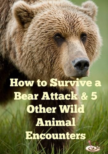 How to Survive a Bear Attack & 5 Other Wild Animal Encounters | The Stir