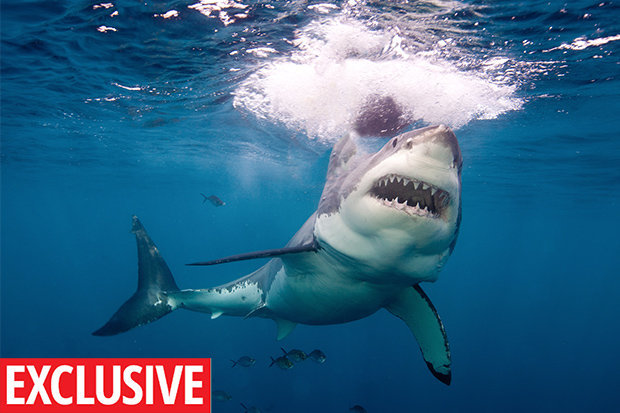 What to do in a shark attack  Wildlife expert reveals top tip     SOMEFIN
