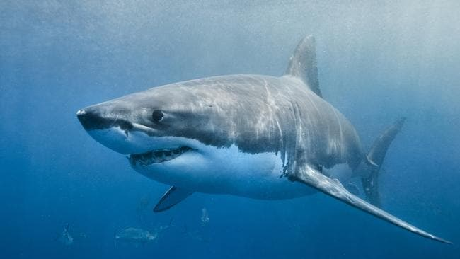 Shark expert reveals the best way to survive an attack   Daily Telegraph A marine biologist warns shark attack victims waste precious time and  energy punching the fearsome predators