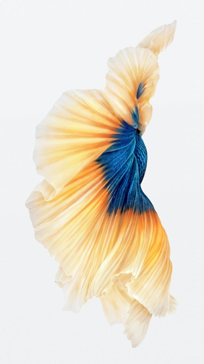 Get the Beautiful Live Wallpapers from iPhone 6s as Still Wallpapers