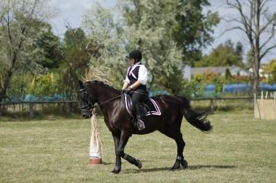 Free photo: Ride, Equestrian, Dressage, Woman - Free Image ...