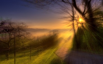 Amazing sunlight through trees wallpaper - Nature wallpapers - #44360