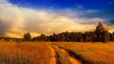 Path on the rusty field towards the forest wallpaper - Nature wallpapers - #54631