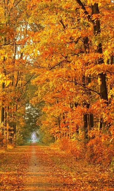Autumn Live Wallpapers | Download APK for Android - Aptoide