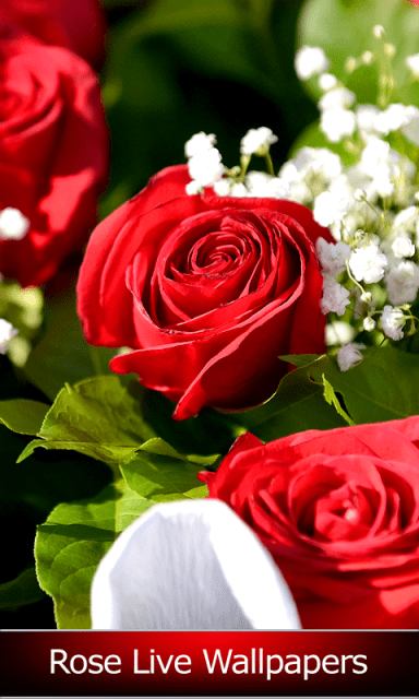 Rose Live Wallpapers | Download APK for Android - Aptoide