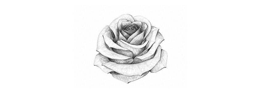 How to Draw a Rose How to Use Gestures to Draw Creatures From Imagination  Final product image