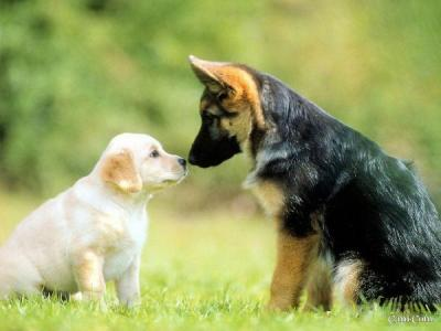 Country-Dog asd | Dog Training Cogntivo Zooantropologico www.country-dog.it