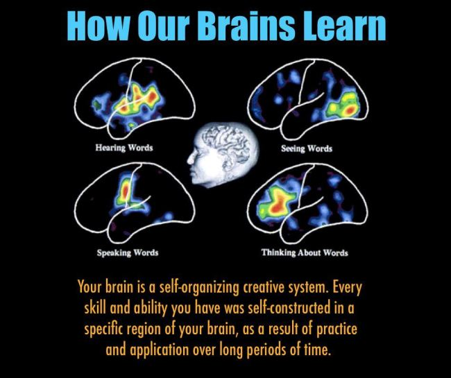 Understanding How Our Brains Learn | Creative by Nature