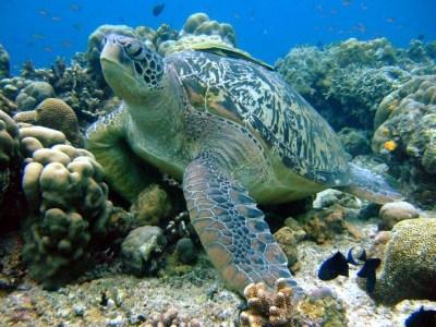22 Free Underwater HD Wallpapers! – Scuba Diving Reviews & Blog