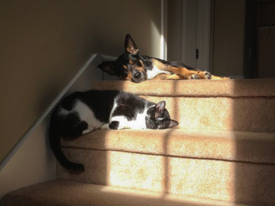 Found their patch of sun