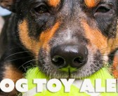 Dog toys with single opening can create dangerous life-threatening suction effect