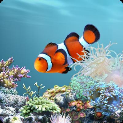 Amazon.com: aniPet Marine Aquarium Live Wallpaper: Appstore for Android