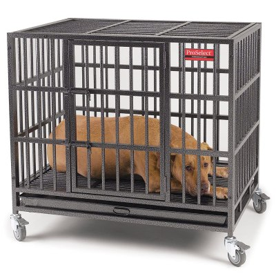 Top 5 Indestructible dog crates