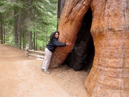 Yosemite Tree Hugging