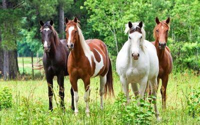 Weide / Onderwerp weiland / Verzorging paard ...