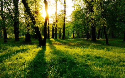 Sun Between Trees Wallpaper Landscape Nature Wallpapers in jpg format for free download