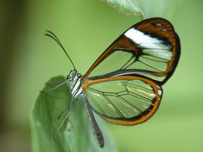 Butterfly Photos | Nature Wallpapers