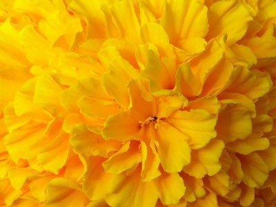Yellow Flower HD Wallpaper | Full HD Pictures