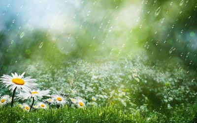 Best Collection Beautiful Rain HD Wallpapers For Desktop