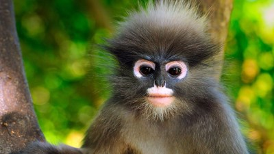Baby Monkey Wallpaper (72+ images)