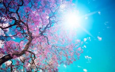 Pink Nature Wallpaper (53+ images)