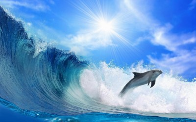 Dolphin Wallpapers (69+ images)