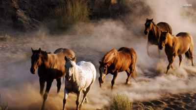 Wild Horse Wallpaper (59+ images)