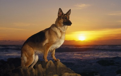 Cool Dogs Wallpapers (60+ images)
