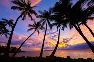 Sunset Palm Trees Wallpaper (62+ images)